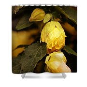 Yellow Hibiscus Late Afternoon Shower Curtain