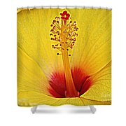Yellow Hibiscus Up Close Shower Curtain