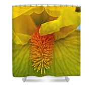 Yellow Iris Beard Shower Curtain
