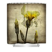 Yellow Iris - Vintage Colors Shower Curtain