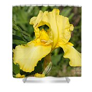Yellow Iris With Tiny Pinch Bug Shower Curtain