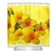 Yellow Kalanchoe - Succulent Sunshine Shower Curtain