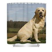 Yellow Labrador Dog Shower Curtain