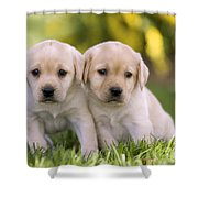 Yellow Labrador Puppies Shower Curtain