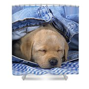 Yellow Labrador Puppy Asleep In Jeans Shower Curtain