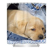Yellow Labrador Puppy In Jeans Shower Curtain