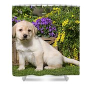 Yellow Labrador Puppy Shower Curtain