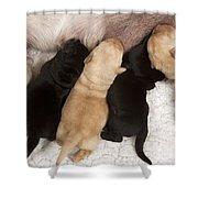 Yellow Labrador Suckling Puppies Shower Curtain