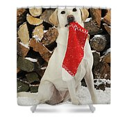 Yellow Labrador With Stocking Shower Curtain