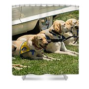 Yellow Labs In Training Shower Curtain