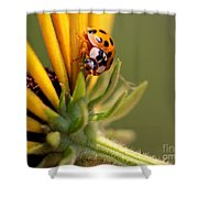 Yellow Lady - 4 Shower Curtain