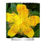 Yellow Lady Pins Shower Curtain