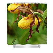 Yellow Lady Slipper Shower Curtain