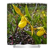 Yellow Lady Slippers Along Emerald Lake Trail In Yoho Np-bc Shower Curtain