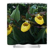 Yellow Lady Slippers On Forest Floor Shower Curtain