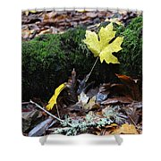 Yellow Leaf Shower Curtain