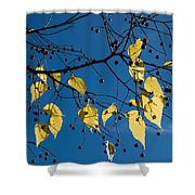 Yellow Leaves And Blue Sky In Autumn Shower Curtain