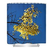 Yellow Leaves In Fall And Deep Blue Sky Shower Curtain