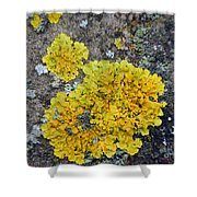 Yellow Lichen Shower Curtain