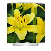 Yellow Lilly 8107 Shower Curtain