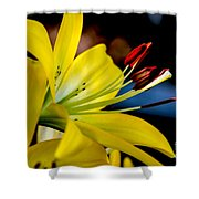 Yellow Lily Anthers Shower Curtain