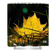Yellow Maple Leaf Shower Curtain