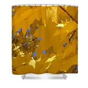 Yellow Maple Leaves Shower Curtain