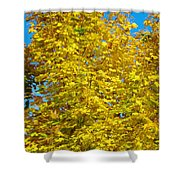 Yellow Maple Shower Curtain