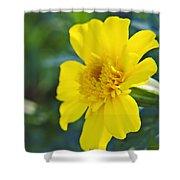 Yellow Marigold Shower Curtain