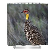 Yellow-necked Francolin... Shower Curtain