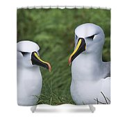 Yellow-nosed Albatross Pair Gough Island Shower Curtain