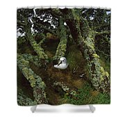 Yellow-nosed Albatrosses In Ferns Shower Curtain