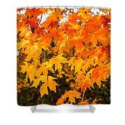 Yellow Orange Fall Tree Shower Curtain