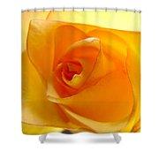 Yellow Orange Rose Shower Curtain