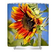 Yellow Orange Sunflower Shower Curtain