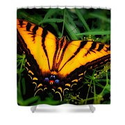 Yellow Orange Tiger Swallowtail Butterfly Shower Curtain