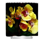 Yellow Orchids Shadow And Light Shower Curtain