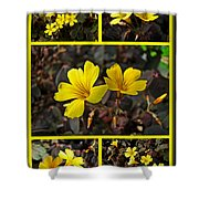 Yellow Oxalis - Oxalis Spiralis Vulcanicola Shower Curtain
