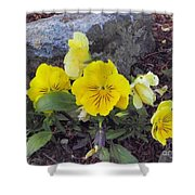Yellow Pansies Shower Curtain