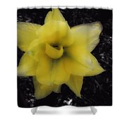 Yellow Parrot Tulip Shower Curtain