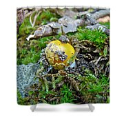 Yellow Patches Baby Mushroom - Amanita Muscaria Shower Curtain
