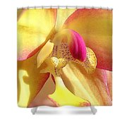 Yellow Pink Orchid Shower Curtain