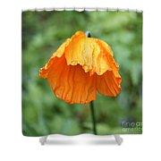 Yellow Poppy - Morning Dew Shower Curtain