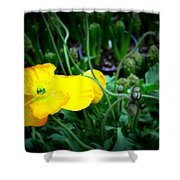 Yellow Poppy Xl Format Floral Photography Shower Curtain