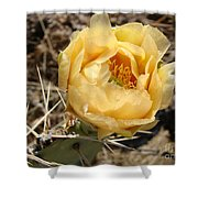 Yellow Prickly Pear Shower Curtain