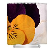 Yellow Purple Pansy Shower Curtain