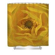 Yellow Ranunculus Shower Curtain