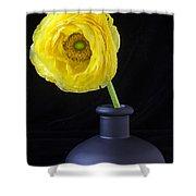Yellow Ranunculus In Black Vase Shower Curtain