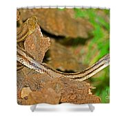 Yellow Rat Snakes Shower Curtain