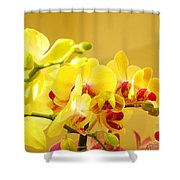 Yellow Red Orchid Flowers Art Prints Orchids Shower Curtain
